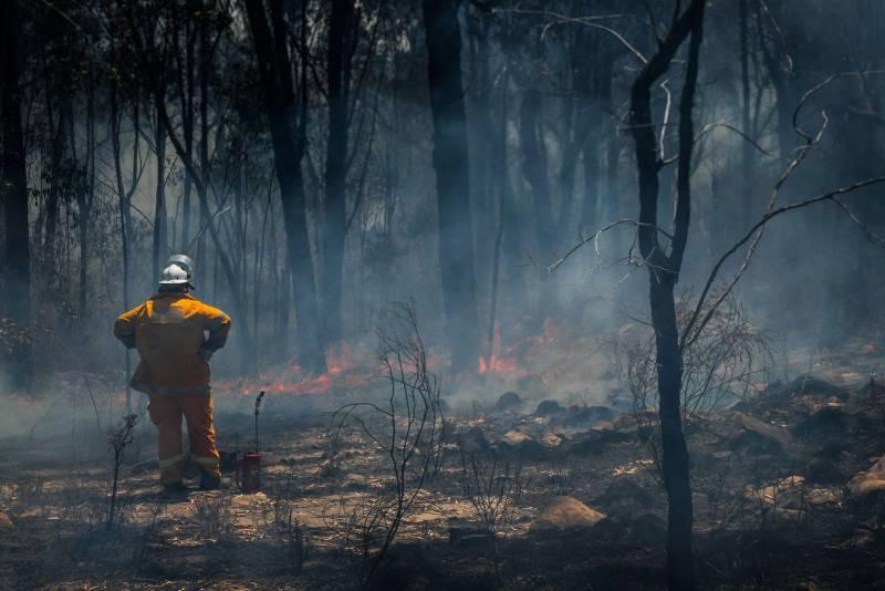 Architectus responds to bushfire crisis